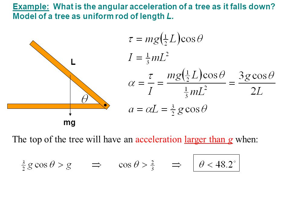 The top of the tree will have an acceleration larger than g when: