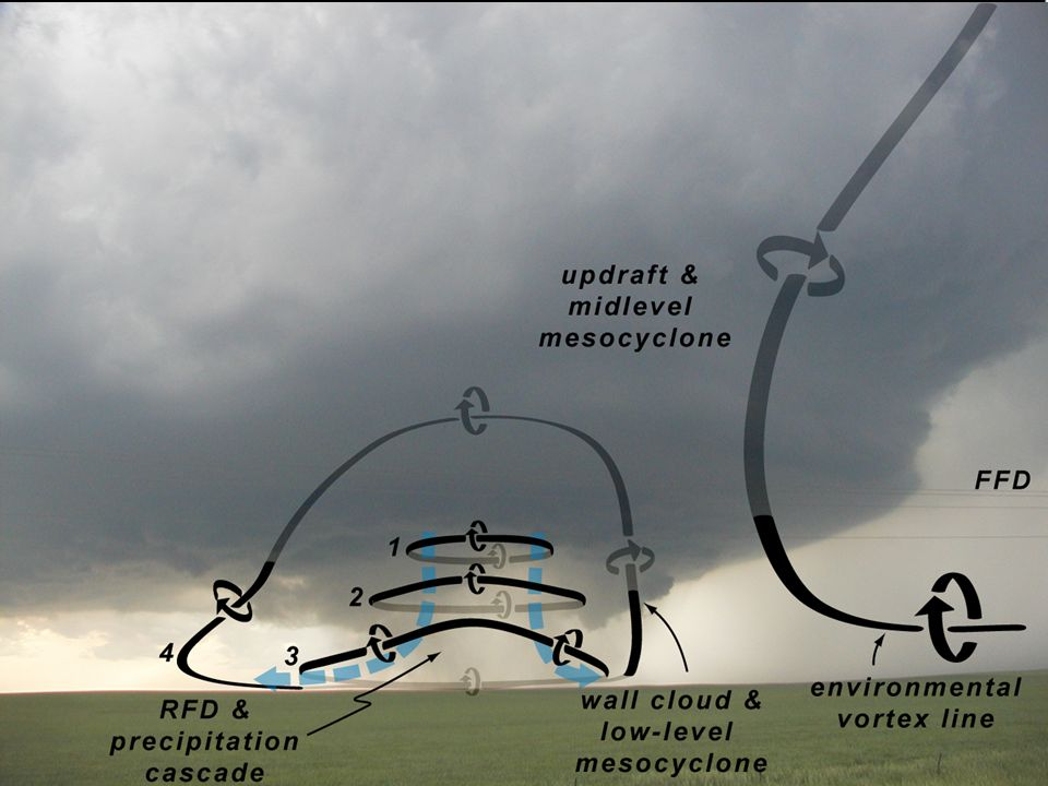 This diagram by Paul Markowski of Penn State illiustrates the origin of rotation near the ground in a supercell.
