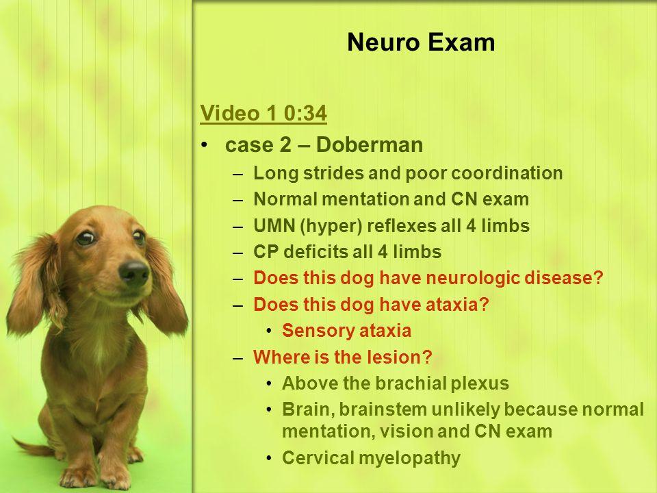 Neuro Exam Video 1 0:34 case 2 – Doberman