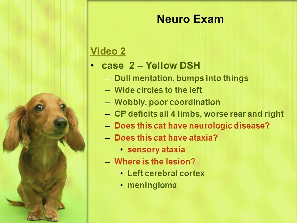 Neuro Exam Video 2 case 2 – Yellow DSH