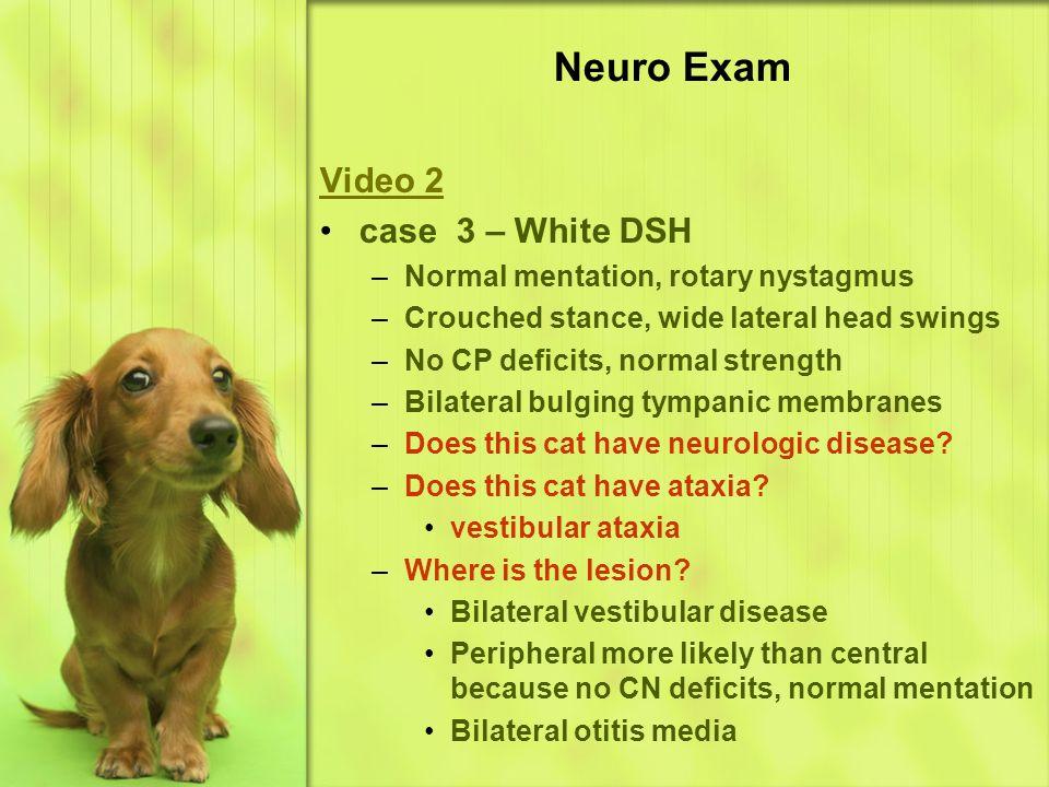 Neuro Exam Video 2 case 3 – White DSH