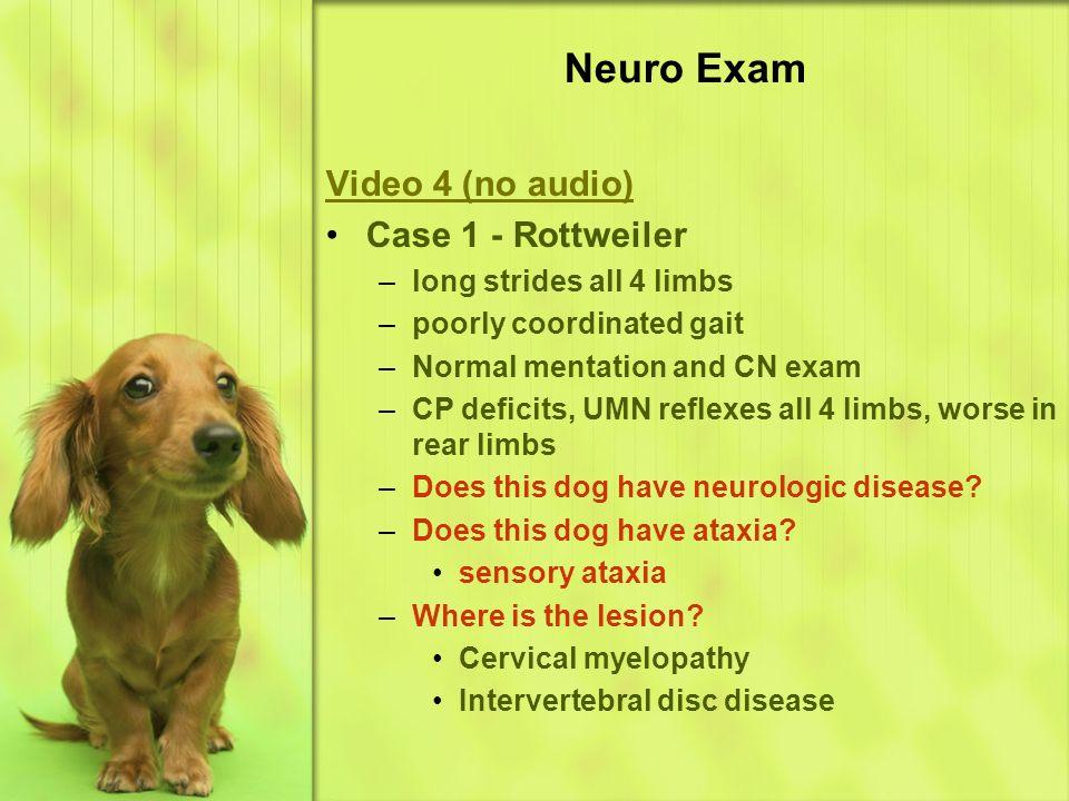 Neuro Exam Video 4 (no audio) Case 1 - Rottweiler