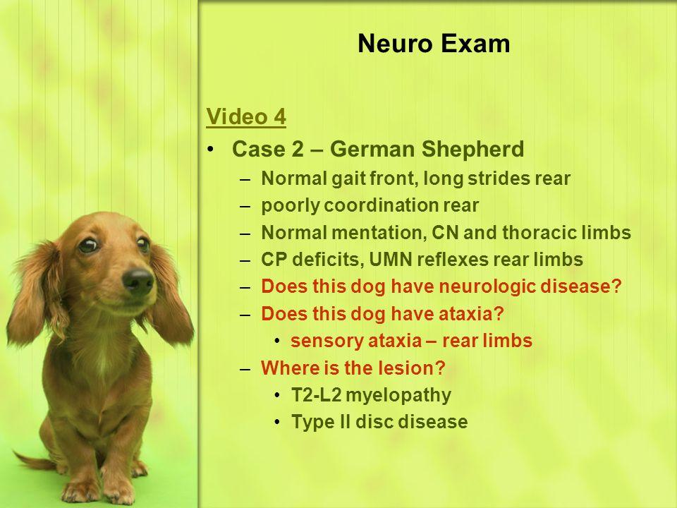 Neuro Exam Video 4 Case 2 – German Shepherd