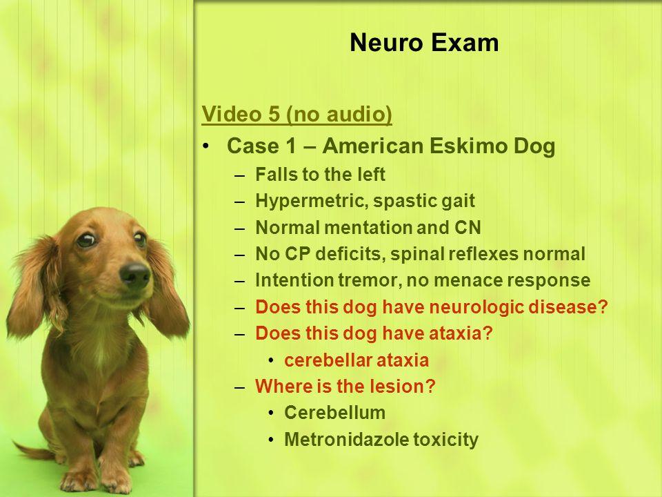 Neuro Exam Video 5 (no audio) Case 1 – American Eskimo Dog