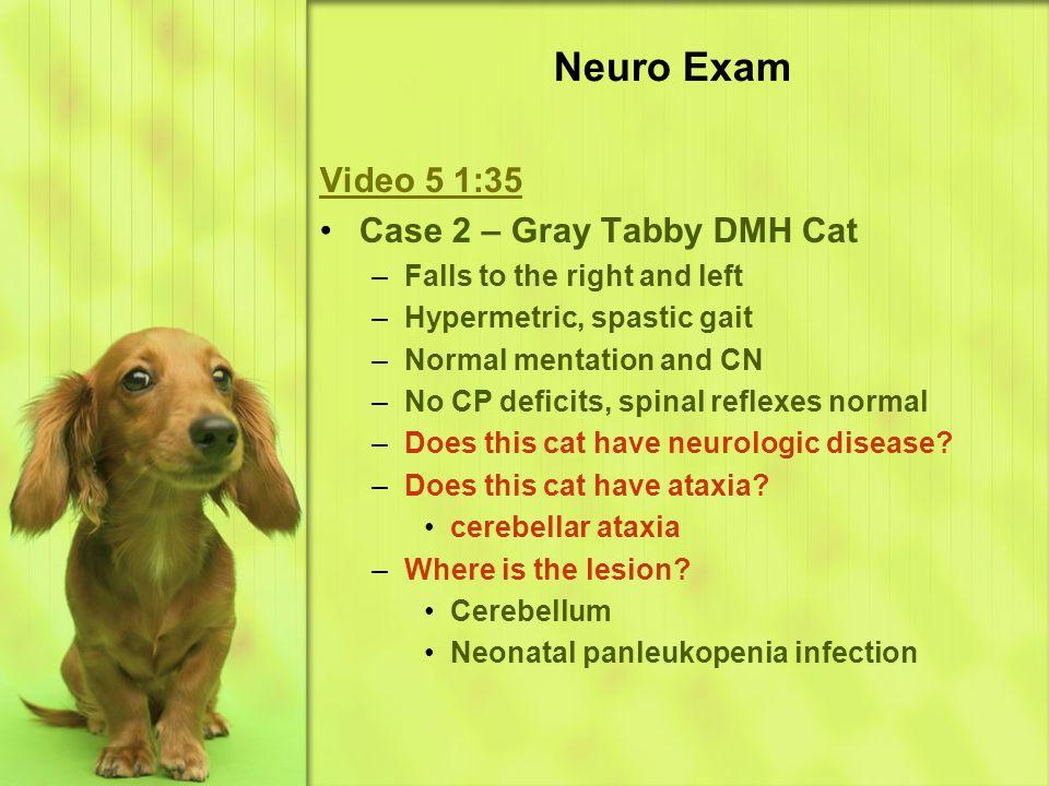 Neuro Exam Video 5 1:35 Case 2 – Gray Tabby DMH Cat