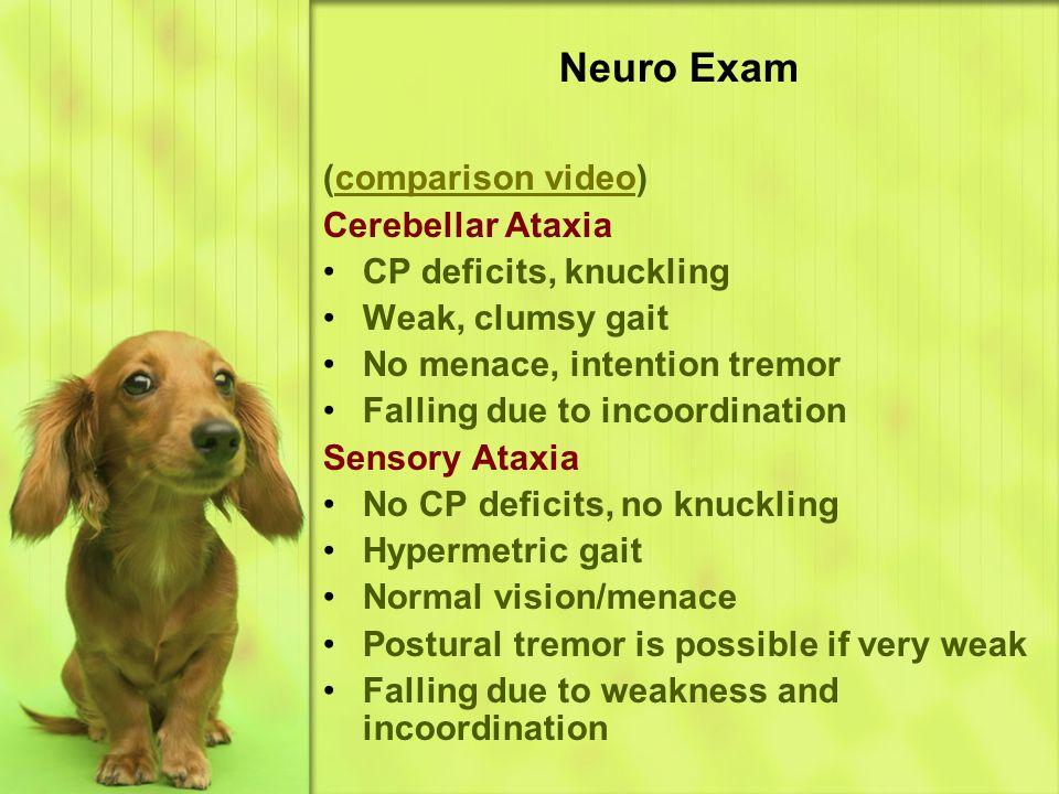 Neuro Exam (comparison video) Cerebellar Ataxia CP deficits, knuckling