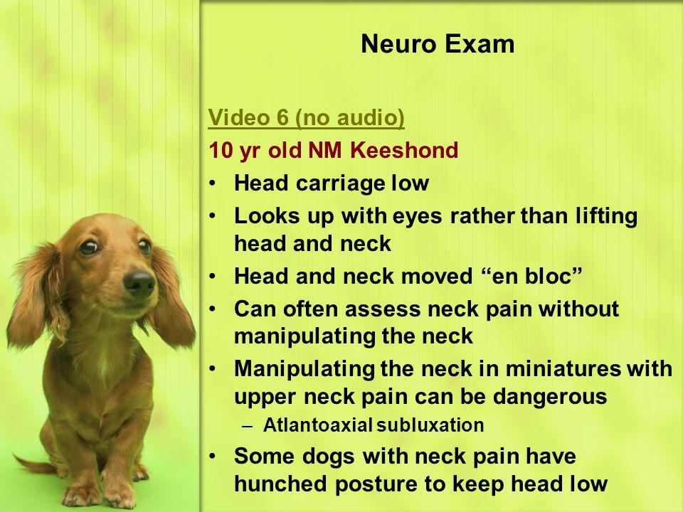 Neuro Exam Video 6 (no audio) 10 yr old NM Keeshond Head carriage low