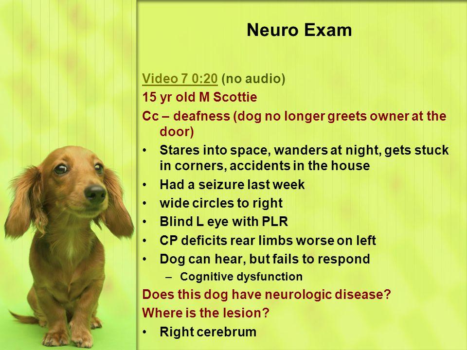 Neuro Exam Video 7 0:20 (no audio) 15 yr old M Scottie