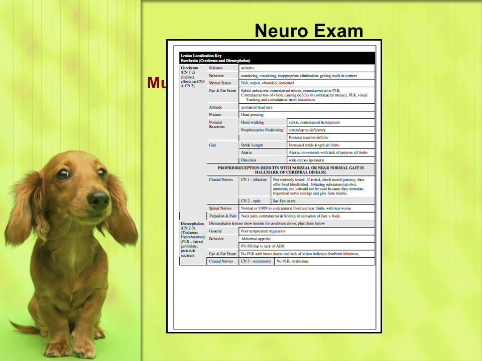 Neuro Exam Multifocal Disease