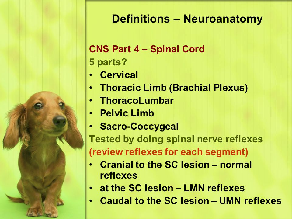 Definitions – Neuroanatomy