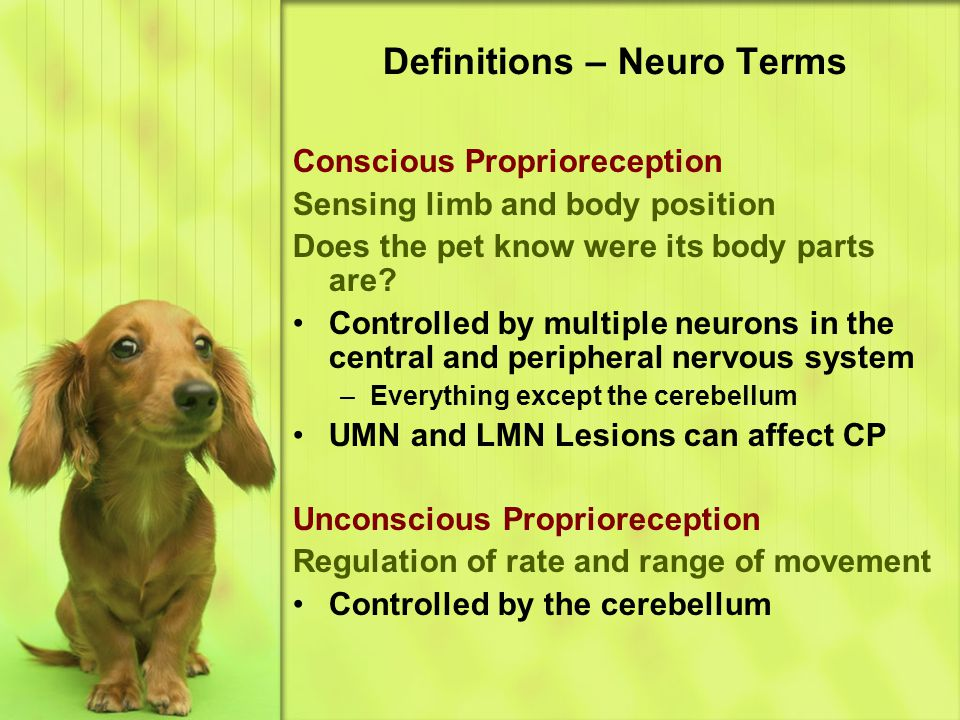 Definitions – Neuro Terms