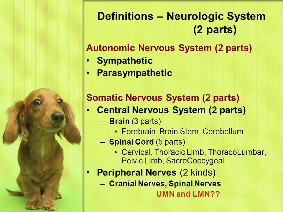 Definitions – Neurologic System (2 parts)