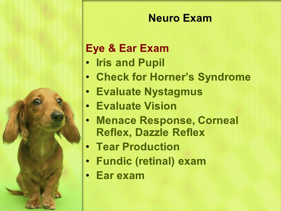 Neuro Exam Eye & Ear Exam. Iris and Pupil. Check for Horner's Syndrome. Evaluate Nystagmus. Evaluate Vision.