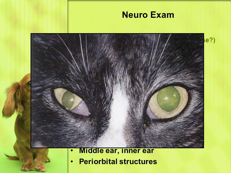 Neuro Exam Eye & Ear – Horner's Syndrome (cause ) Miosis Ptosis