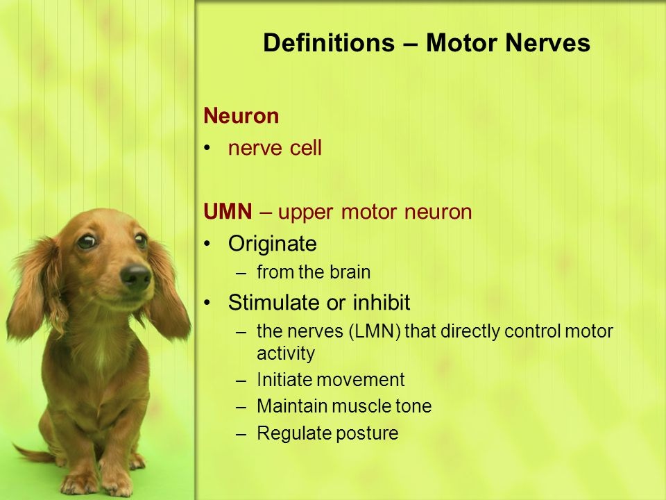 Definitions – Motor Nerves