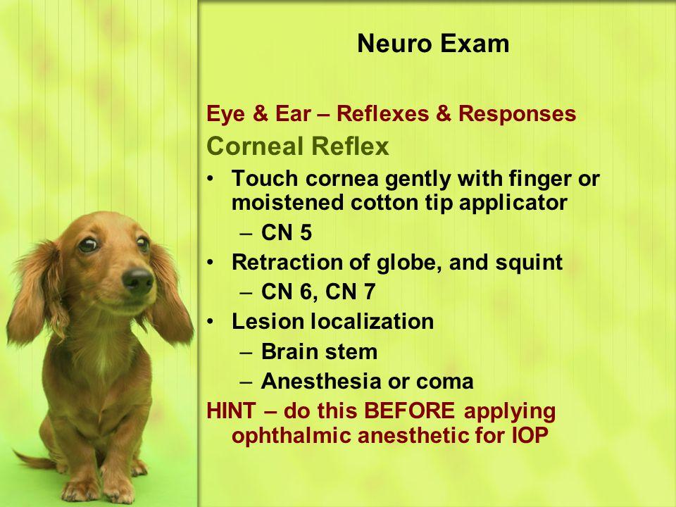 Neuro Exam Corneal Reflex Eye & Ear – Reflexes & Responses