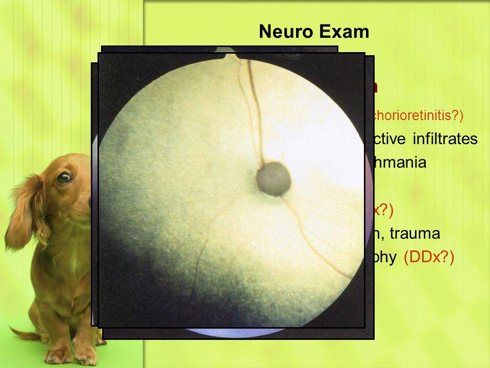 Retina & Tapetum (DDx chorioretinitis )