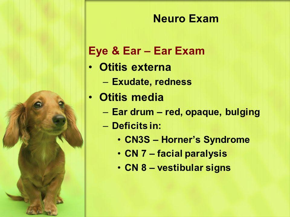 Neuro Exam Eye & Ear – Ear Exam Otitis externa Otitis media