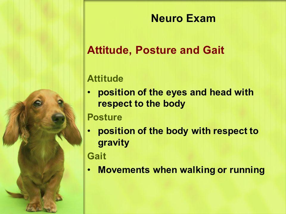 Attitude, Posture and Gait