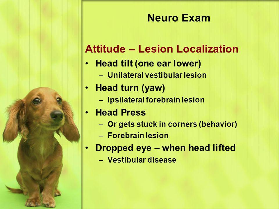 Attitude – Lesion Localization
