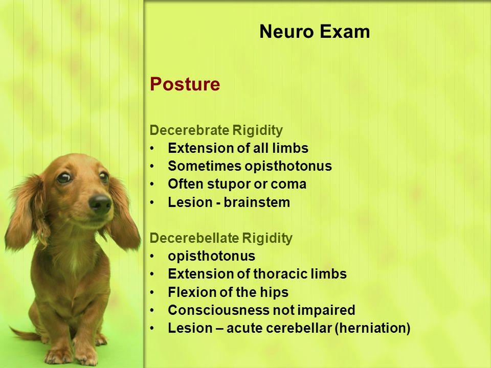 Neuro Exam Posture Decerebrate Rigidity Extension of all limbs