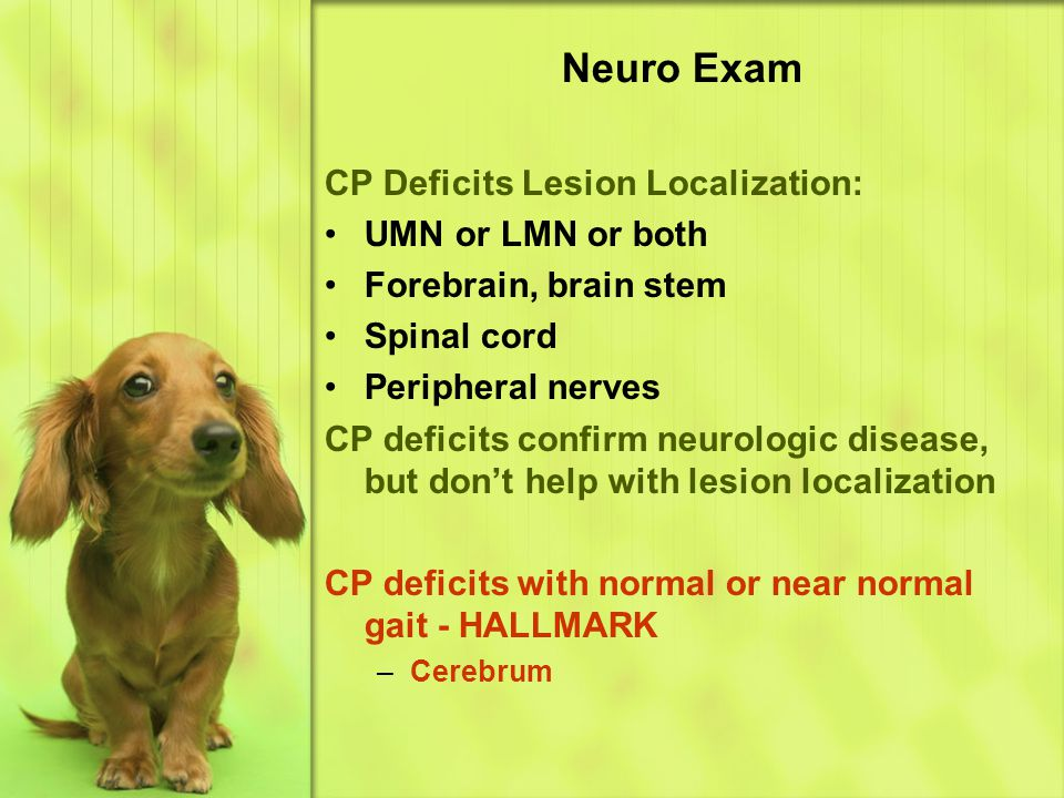Neuro Exam CP Deficits Lesion Localization: UMN or LMN or both