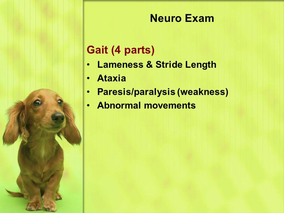 Neuro Exam Gait (4 parts) Lameness & Stride Length Ataxia