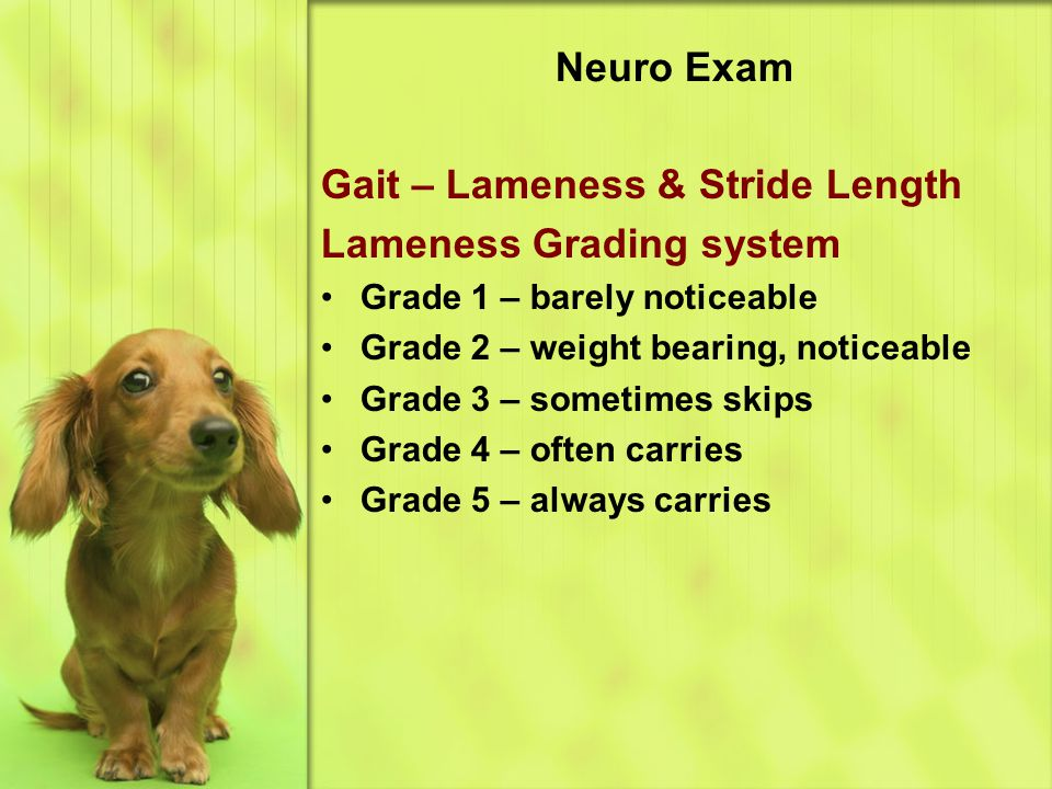 Gait – Lameness & Stride Length Lameness Grading system