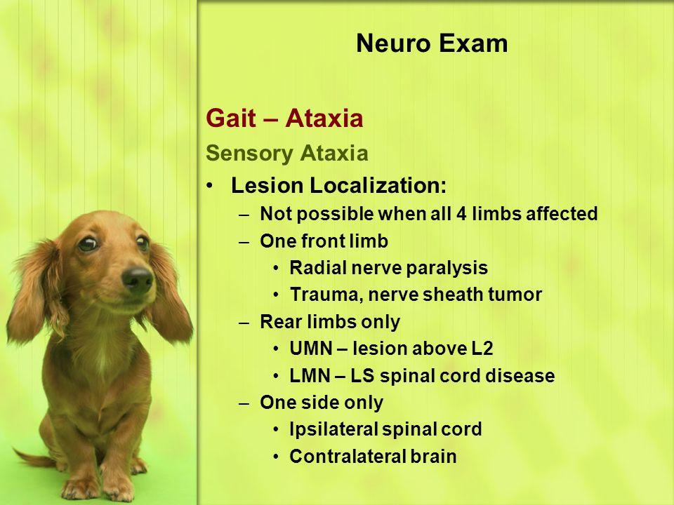 Neuro Exam Gait – Ataxia Sensory Ataxia Lesion Localization: