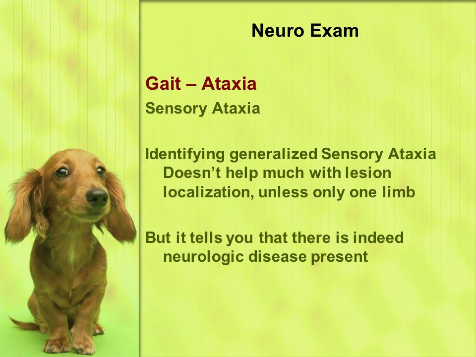 Neuro Exam Gait – Ataxia Sensory Ataxia