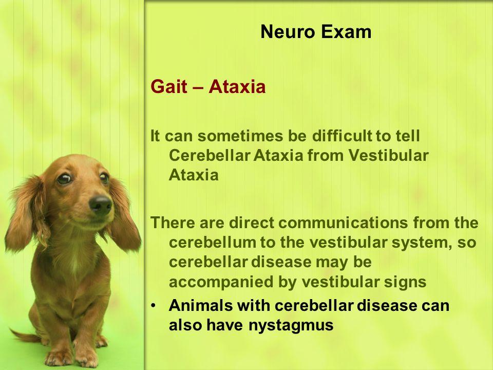 Neuro Exam Gait – Ataxia