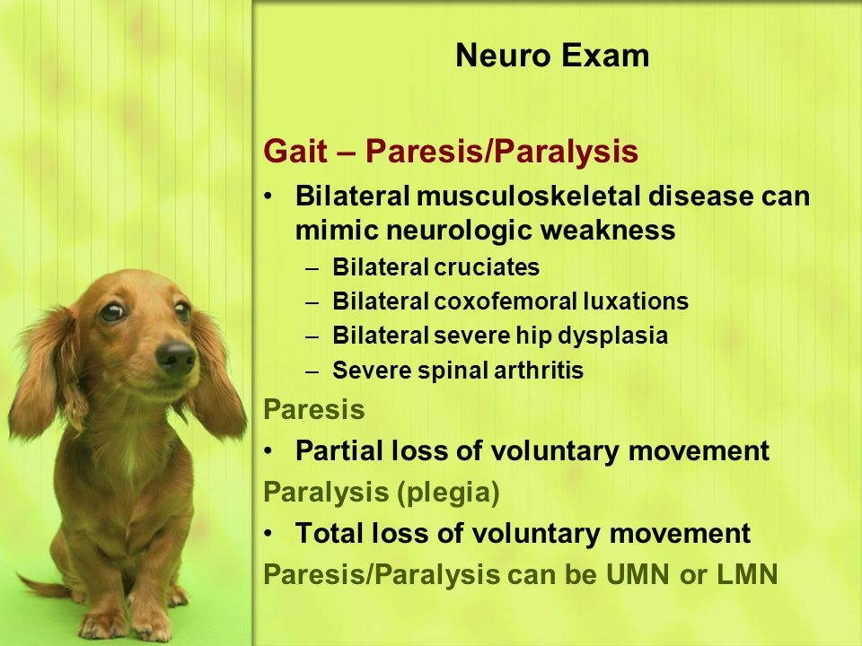 Gait – Paresis/Paralysis