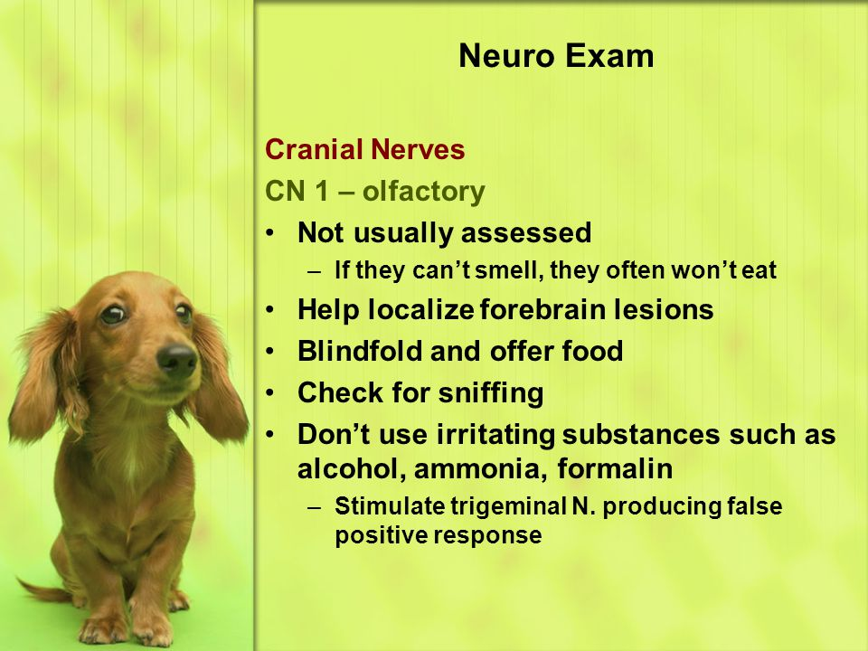 Neuro Exam Cranial Nerves CN 1 – olfactory Not usually assessed