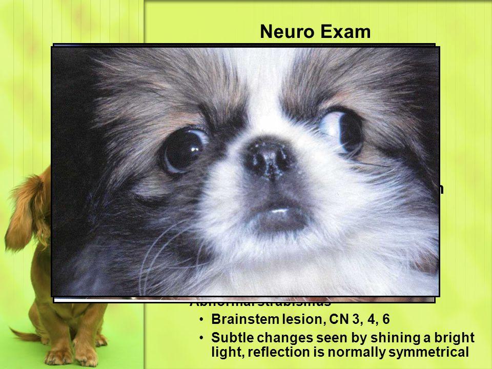 Neuro Exam CN 2 – optic CN 3 – oculomotor CN 4 – trochlear