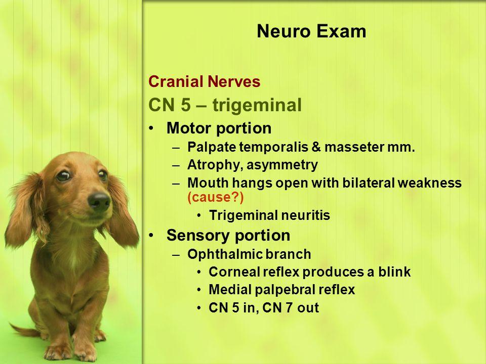 Neuro Exam CN 5 – trigeminal Cranial Nerves Motor portion