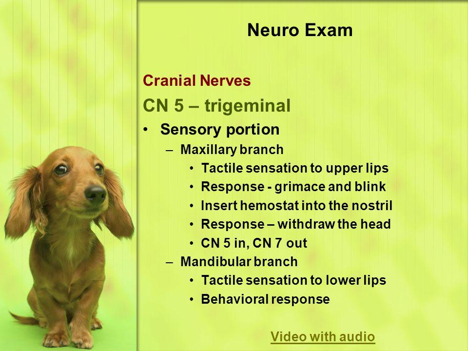Neuro Exam CN 5 – trigeminal Cranial Nerves Sensory portion