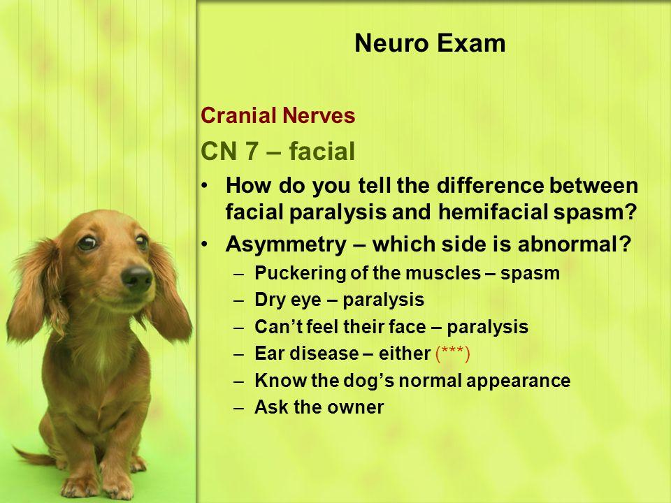 Neuro Exam CN 7 – facial Cranial Nerves