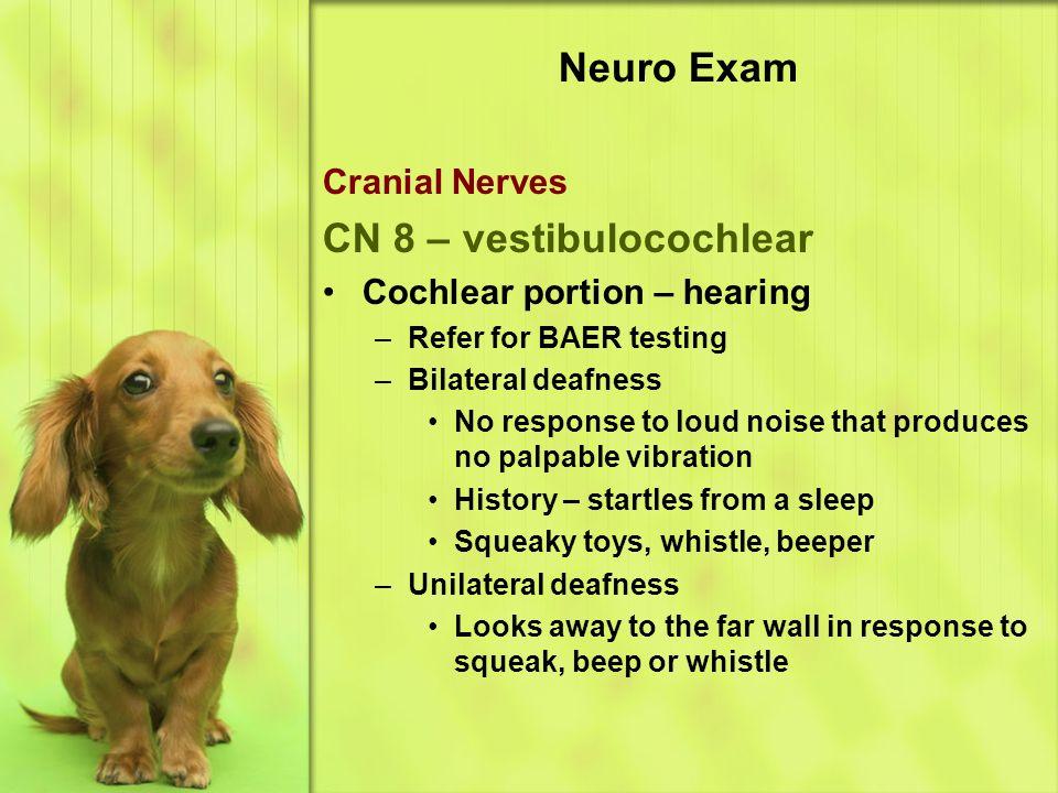 CN 8 – vestibulocochlear