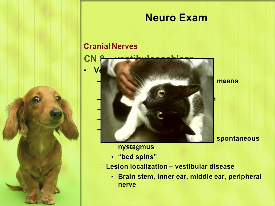 Neuro Exam CN 8 – vestibulocochlear Cranial Nerves