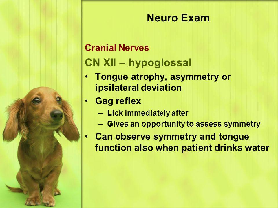Neuro Exam CN XII – hypoglossal Cranial Nerves