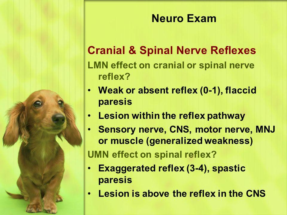 Cranial & Spinal Nerve Reflexes