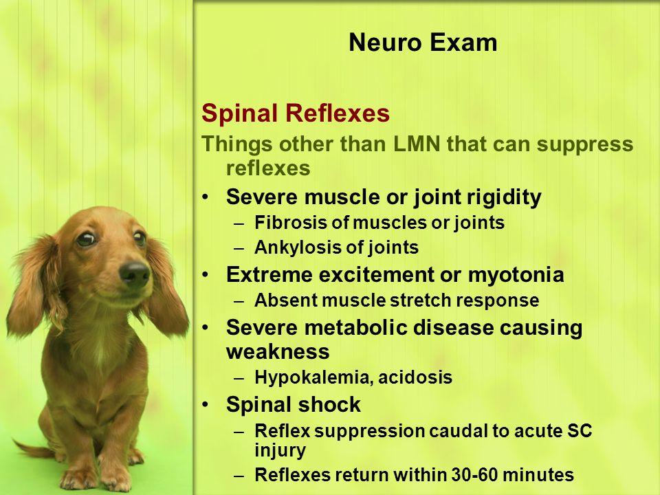 Neuro Exam Spinal Reflexes