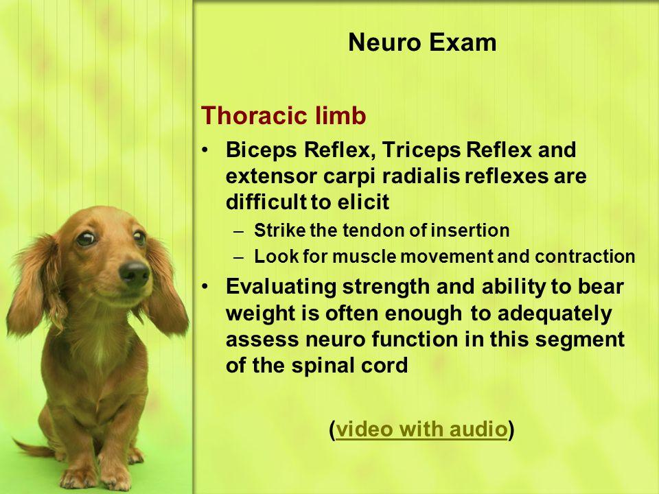 Neuro Exam Thoracic limb