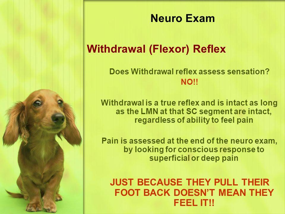 Withdrawal (Flexor) Reflex
