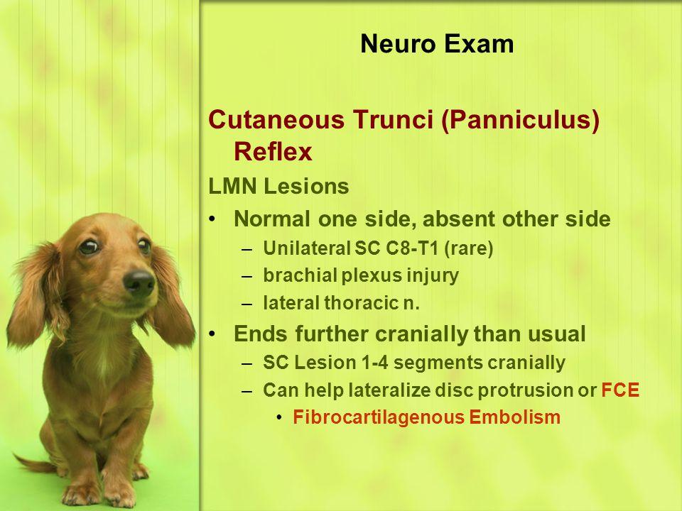 Cutaneous Trunci (Panniculus) Reflex