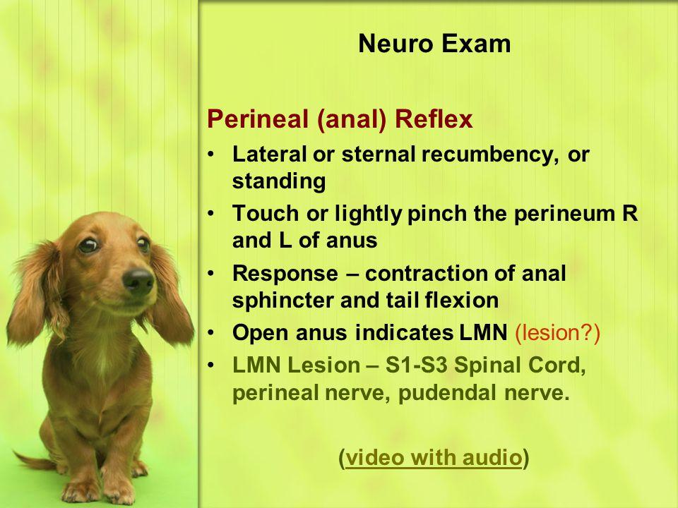 Perineal (anal) Reflex