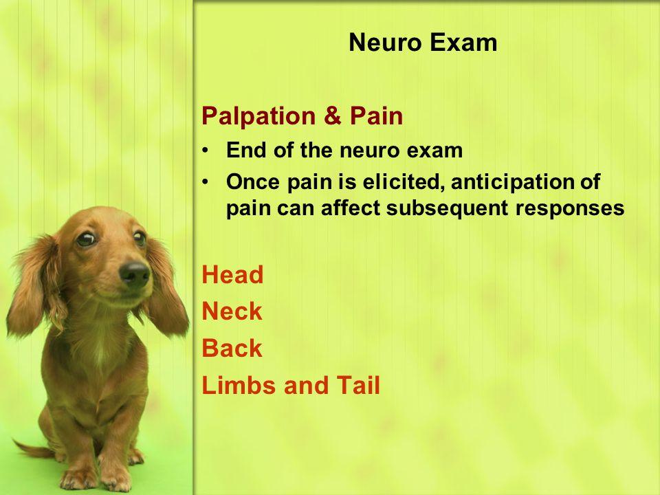Neuro Exam Palpation & Pain Head Neck Back Limbs and Tail