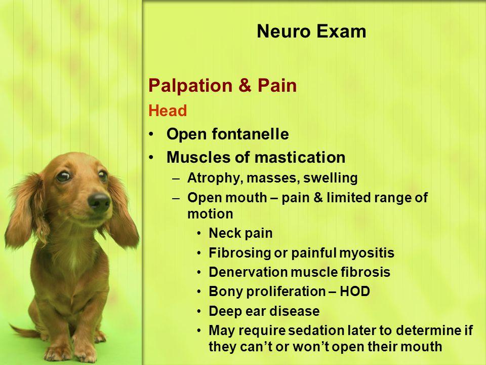 Neuro Exam Palpation & Pain Head Open fontanelle