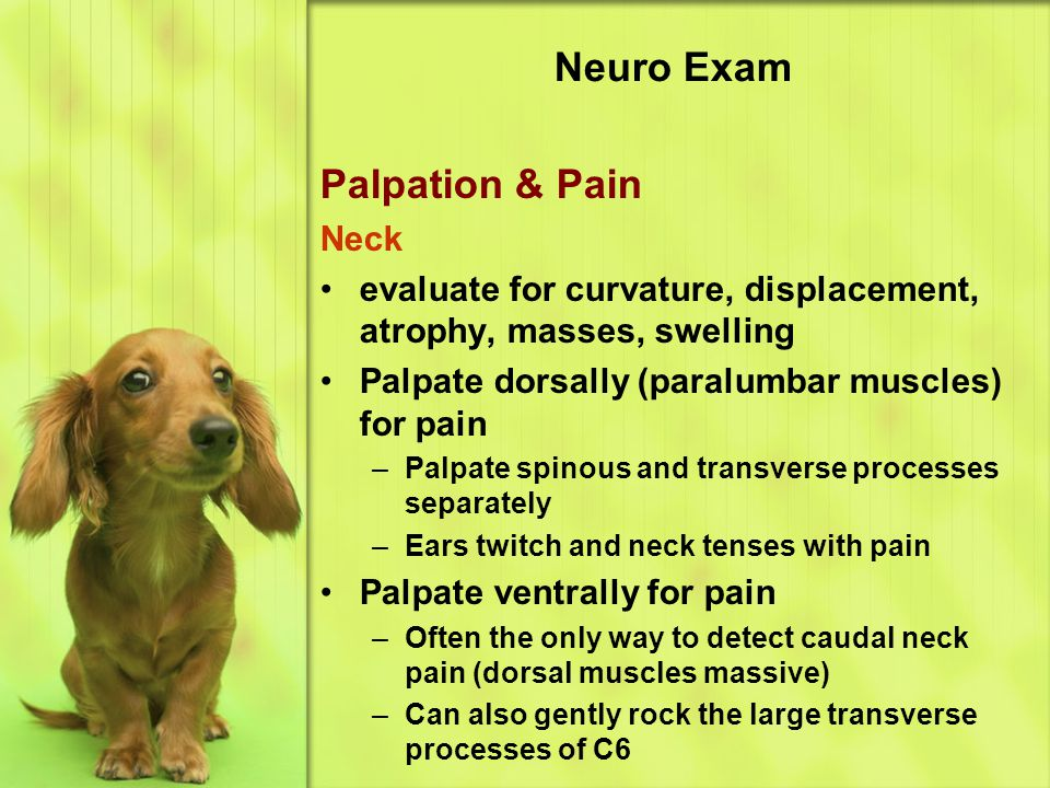 Neuro Exam Palpation & Pain Neck