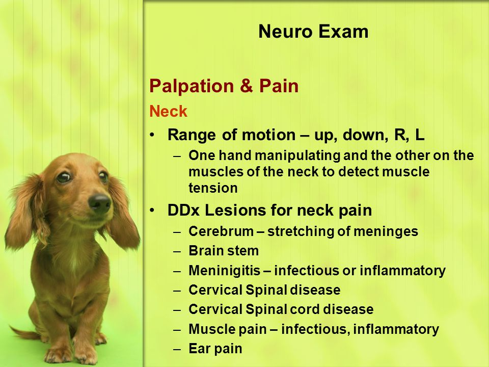 Neuro Exam Palpation & Pain Neck Range of motion – up, down, R, L